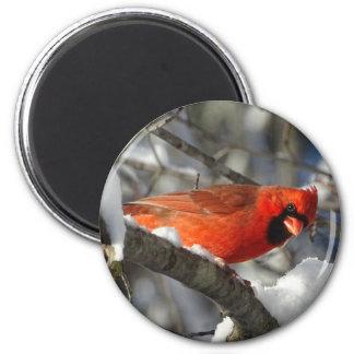 Kardinal Runder Magnet 5,7 Cm