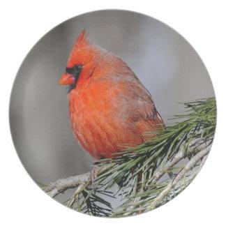Kardinals-Anzeigen-Platte Flache Teller