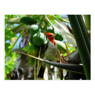 Kardinals-Hawaii-Paradiesvogel Kokosnüsse Postkarte