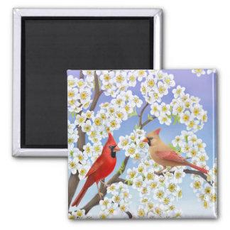 Kardinals-Paare im blühender Baum-Magneten Quadratischer Magnet