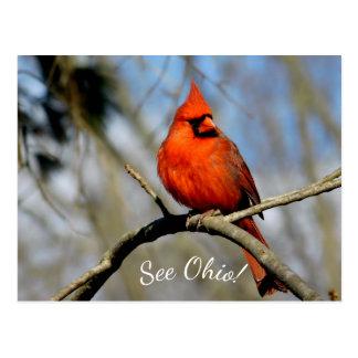 Kardinals-(sehen Sie Ohio), Postkarte
