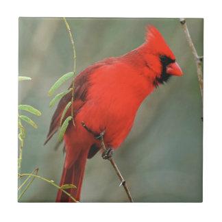 Kardinals-Vogel-Foto Keramikfliese