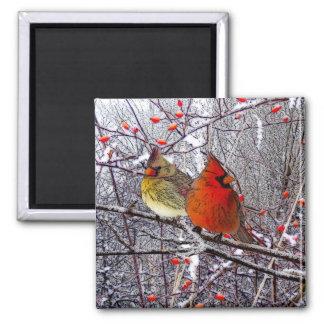 Kardinals-Weihnachtsmagnet Quadratischer Magnet