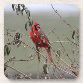 Kardinalsvogel - Untersetzer