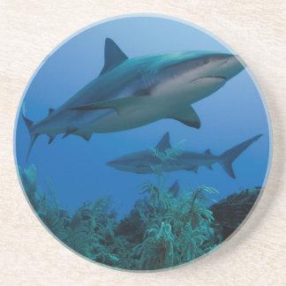 Karibisches Riff Shark Jardines de la Reina Getränkeuntersetzer