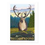 Karibu im wilden - Yellowstone-Staatsangehöriger Postkarten