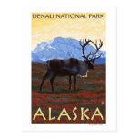 Karibu-Szene - Denali Nationalpark, Alaska Postkarten