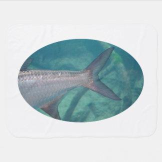 Karpfen-Schwanz im Wasserfisch-Tierbild Puckdecke