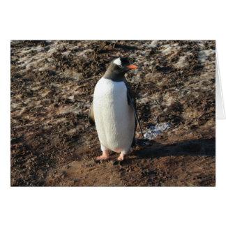 Karte Gentoo Pinguins (HO)