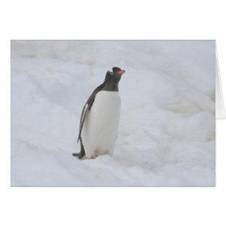 Karte Gentoo Pinguins (Neko)