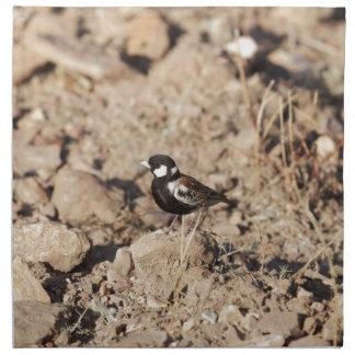 Kastanie unterstütztes sparrowlark (Eremopterix Stoffserviette