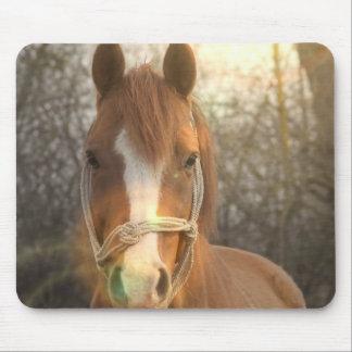 Kastanien-arabische Pferdemausunterlage Mousepad