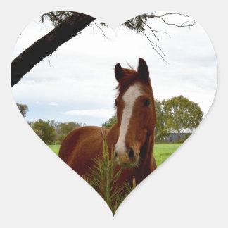 Kastanien-Pferd, das einen Banksia-Baum Herz-Aufkleber