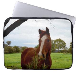 Kastanien-Pferd, das einen Banksia-Baum Laptopschutzhülle