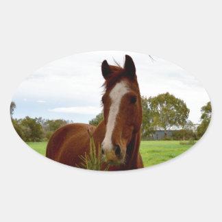 Kastanien-Pferd, das einen Banksia-Baum Ovaler Aufkleber