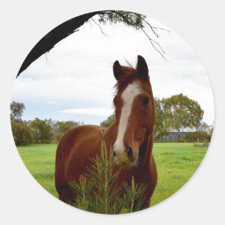 Kastanien-Pferd, das einen Banksia-Baum Runder Aufkleber