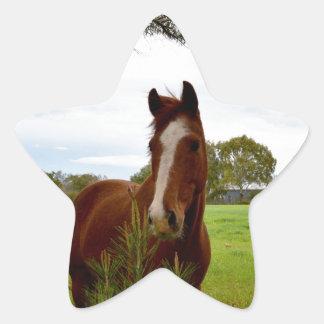 Kastanien-Pferd, das einen Banksia-Baum Stern-Aufkleber