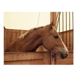 Kastanien-Pferd mit Flamme im Stall Postkarte