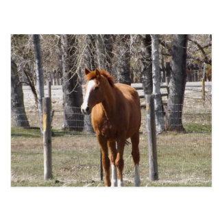 Kastanien-Pferdepostkarte