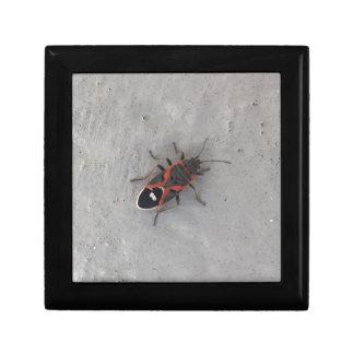 Kasten-Ältest-Käfer Erinnerungskiste