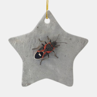 Kasten-Ältest-Käfer Keramik Stern-Ornament