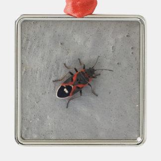 Kasten-Ältest-Käfer Quadratisches Silberfarbenes Ornament