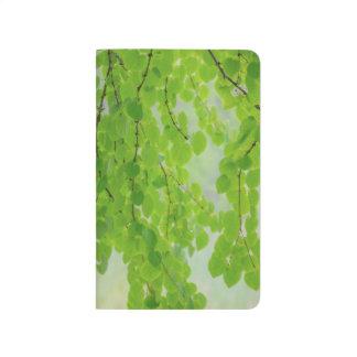 Katsura Äste in Frühjahr | Seabeck, WA Taschennotizbuch