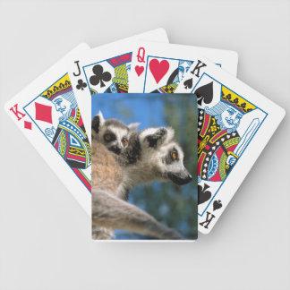 Katta, Halbaffe Katta (Lemur catta) mit Jungem Bicycle Spielkarten