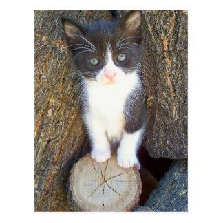 Kätzchen 2 postkarten
