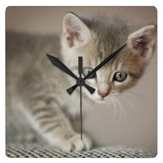 Kätzchen (6 Wochen) Quadratische Wanduhr