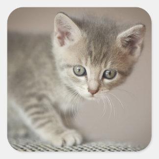 Kätzchen (6 Wochen) Quadratischer Aufkleber