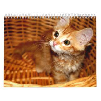 Kätzchen! Abreißkalender