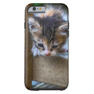 Kätzchen auf Iphone Abdeckung Tough iPhone 6 Hülle