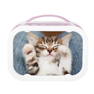 Kätzchen auf meinem Schoss Brotdose