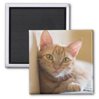 Kätzchen, das auf der Couch liegt Quadratischer Magnet