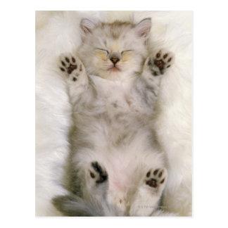 Kätzchen, das auf einem weißen flaumigen Teppich,  Postkarte