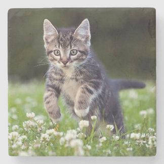 Kätzchen, das durch Klee läuft Steinuntersetzer