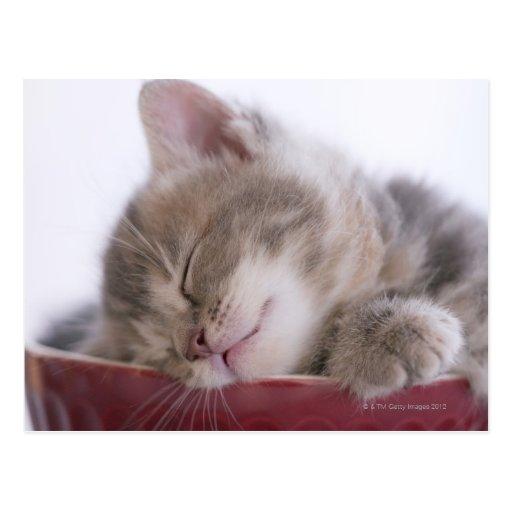 Kätzchen, das in Schüssel 2 schläft Postkarte