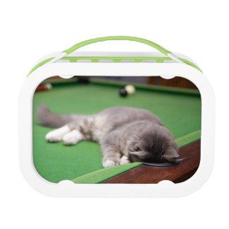 Kätzchen, das Pool spielt Brotdose