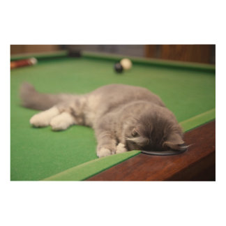Kätzchen, das Pool spielt Holzdruck