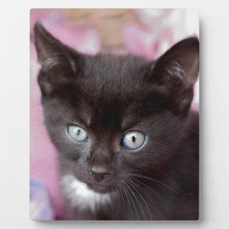 Kätzchen Fotoplatte