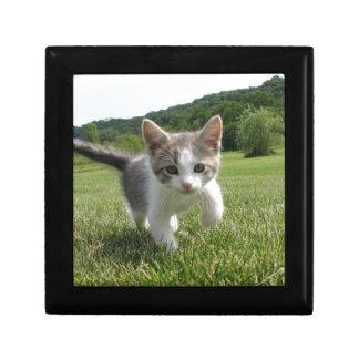 Kätzchen Geschenkbox