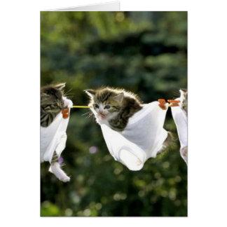 Kätzchen in der Unterwäsche auf Wäscheleine Karte