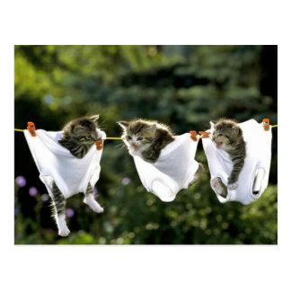 Kätzchen in der Unterwäsche auf Wäscheleine Postkarte