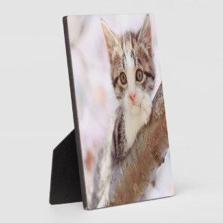 Kätzchen in einem Baum Fotoplatte