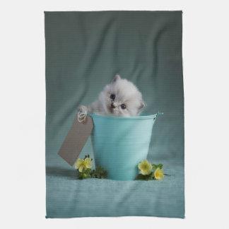 Kitten in a Bucket