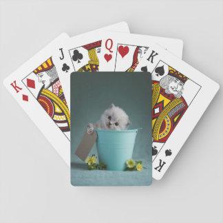 Kätzchen in einem Eimer Spielkarten