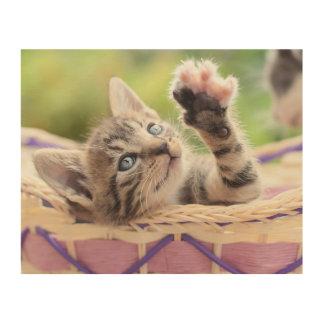 Kätzchen in einem Korb Holzleinwand
