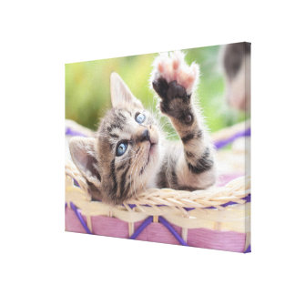 Kätzchen in einem Korb Leinwanddruck