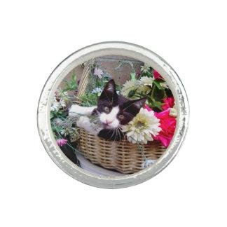 Kätzchen in einem Korb Ring